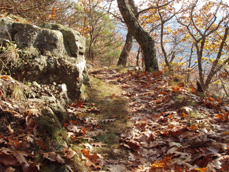 a leaf-covered trail in Shenandoah National Park