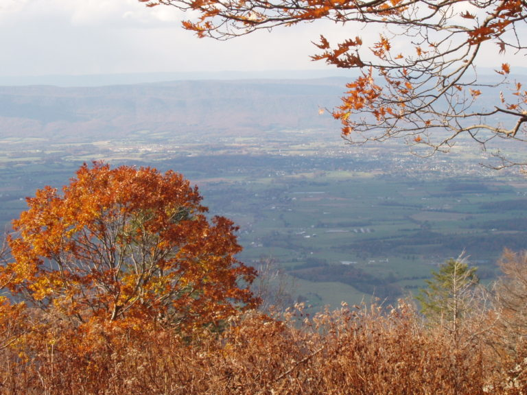 Shenandoah Valley in the distance a fall tree in the foreground