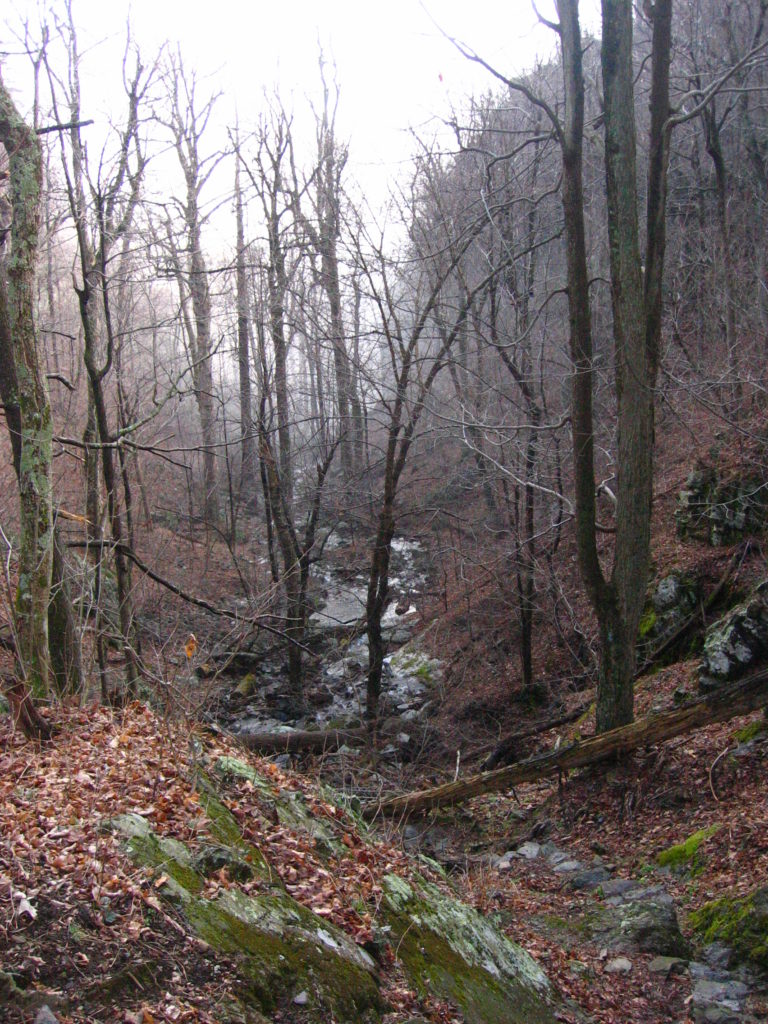 a stream surrounded by leafless trees