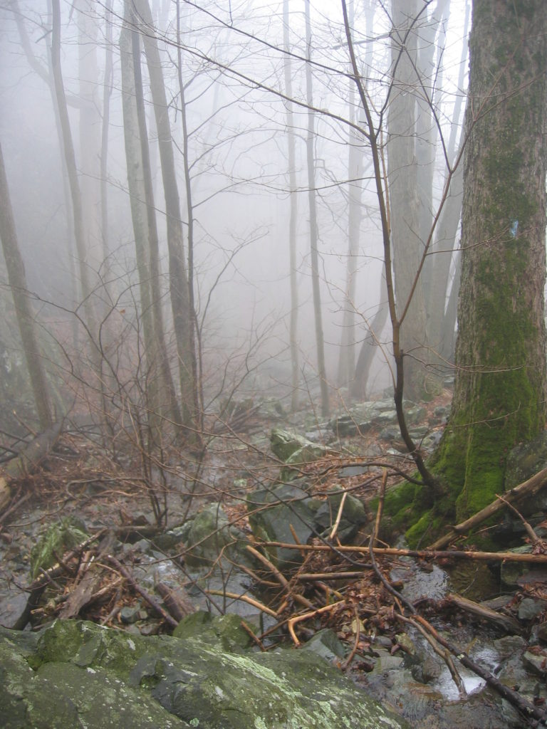 image of stream in mist