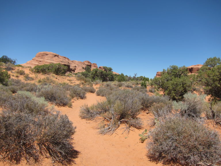 a desert trail in Arches National Park
