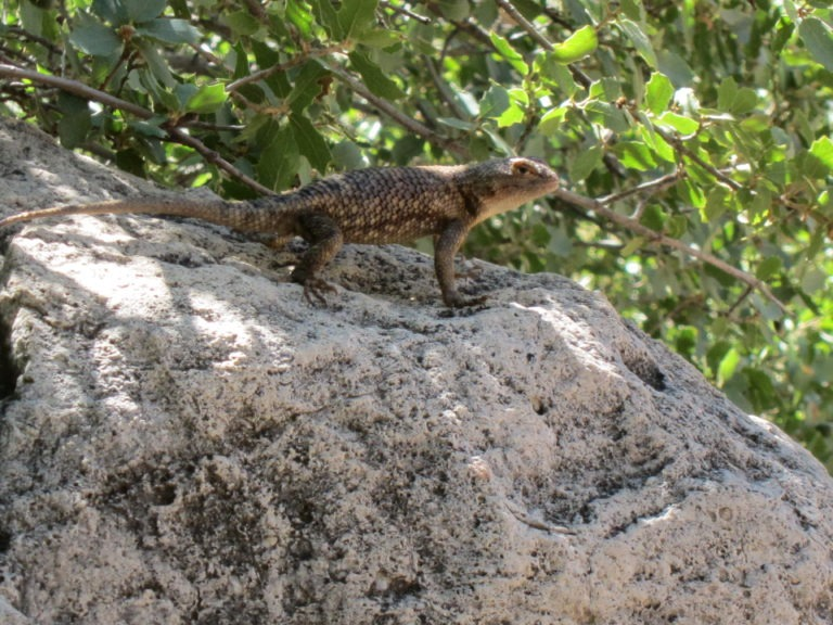 a green lizard on a gray rock