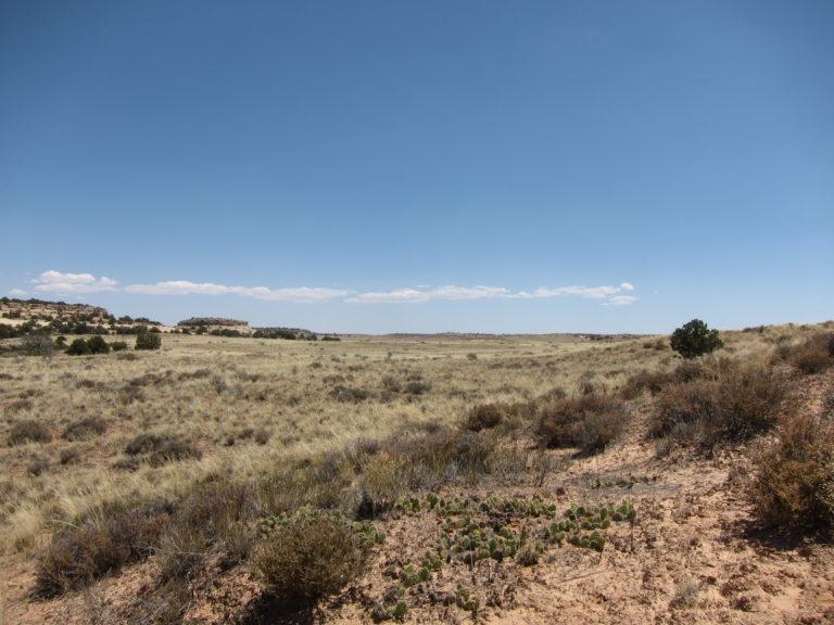 green desert grass in Canyonlands National Park