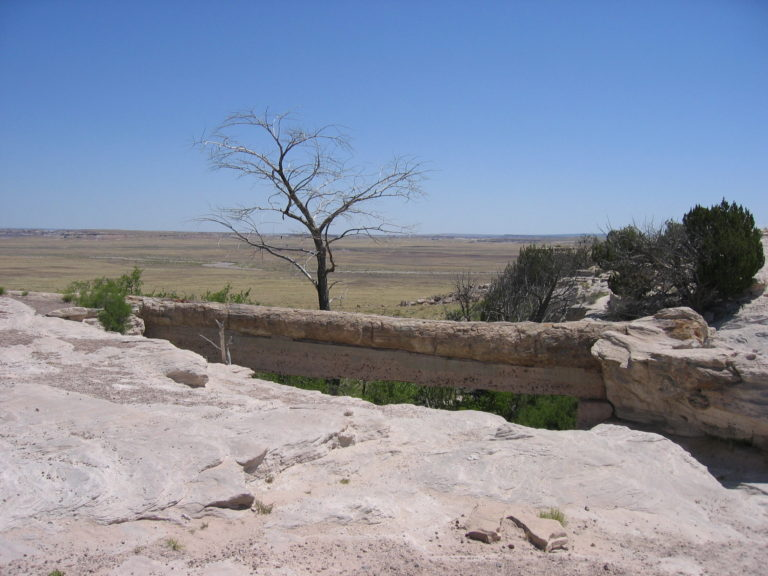 a leafless tree in the Painted Desert