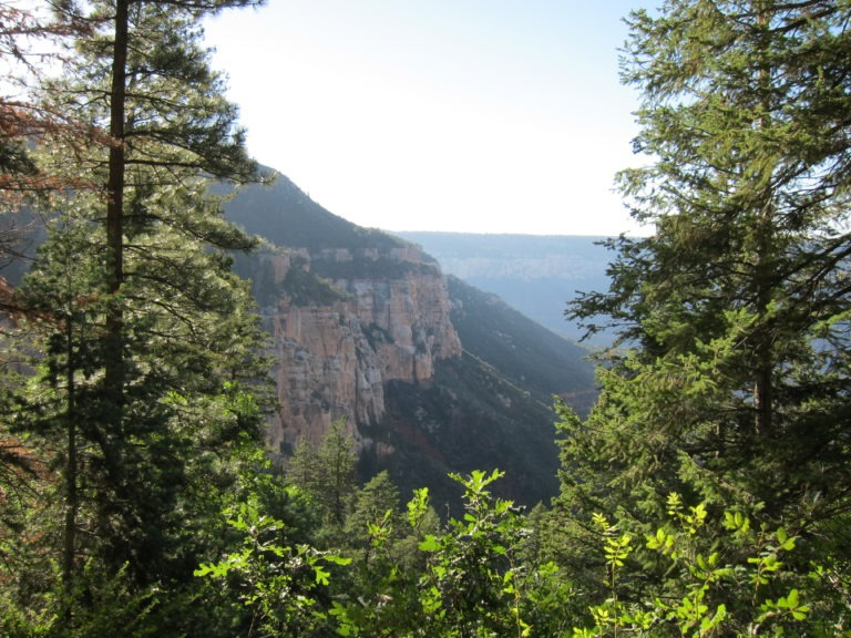 green trees at the Grand Canyon North Rim