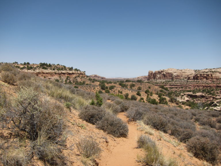 the Neck Spring Trail meandering into an open canyon