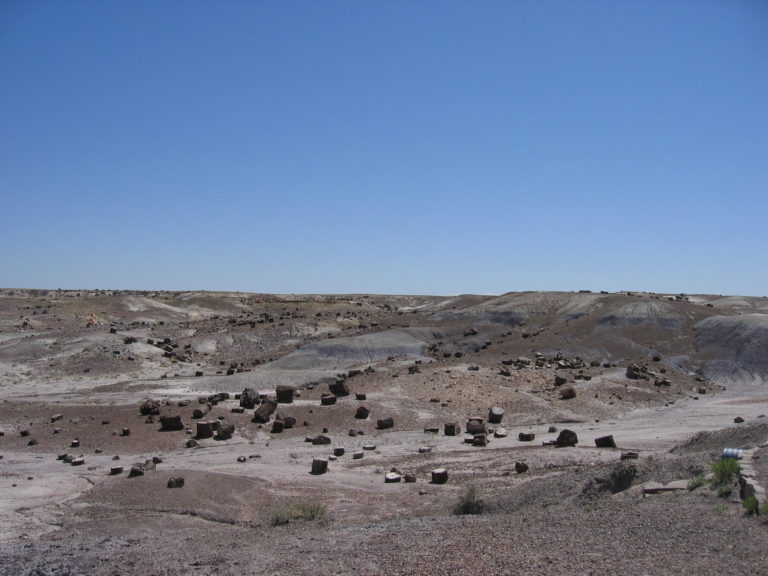 petrified wood in Arizona's Painted Desert