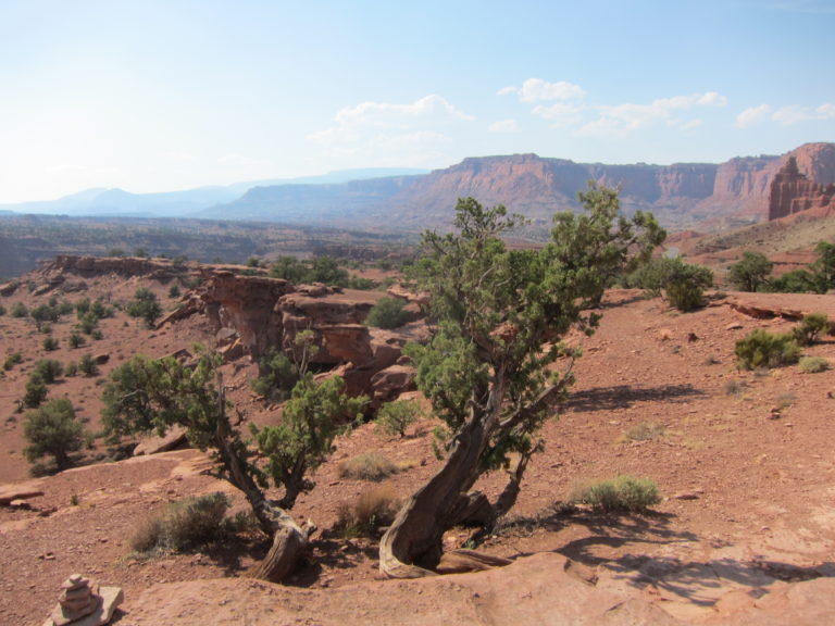 small green trees on a desert overlook at the western edge of Capitol Reef National Park